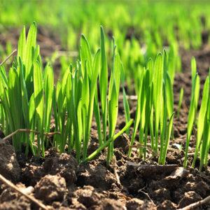 Системы контроля высева семян